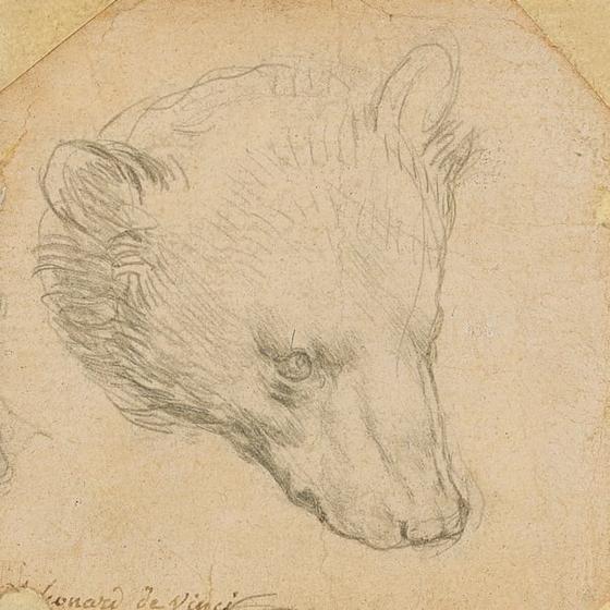 레오나르도 다빈치가 그린 '곰의 머리' . [사진 로이터=연합뉴스]