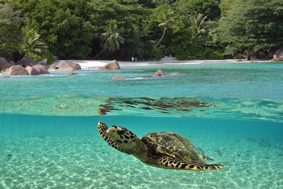 115개 섬으로 이뤄진 인도양 섬나라 세이셸 공화국의 해변. [중앙포토]