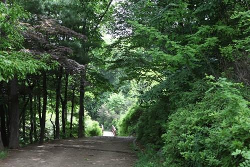 녹음이 짙어진 우면산 산책로. [사진 조남대]