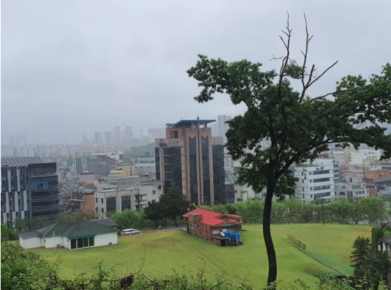 서울 서초구 양재역 남쪽 10차선 대로 바로 옆에 있는 단층 주택 2채. 서초구에 따르면 넓은 정원을 갖춘 이 주택 2채는 무허가 건물이다. 함종선 기자