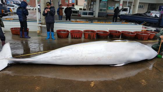 2018년 포항에서 발견된 밍크고래.(위 사진은 기사 내용과 관련 없습니다) 뉴스1