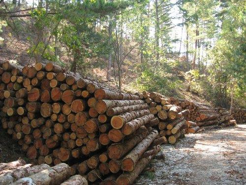 벌채된 목재. 산림청은 해마다 5000~6000그루 목재를 벌채해왔는데, 지난 1월 발표한 '2050 탄소중립 산림부문 추진 전략'에서 벌채량을 2배 가까이 늘리겠다고 발표했다. 연합뉴스
