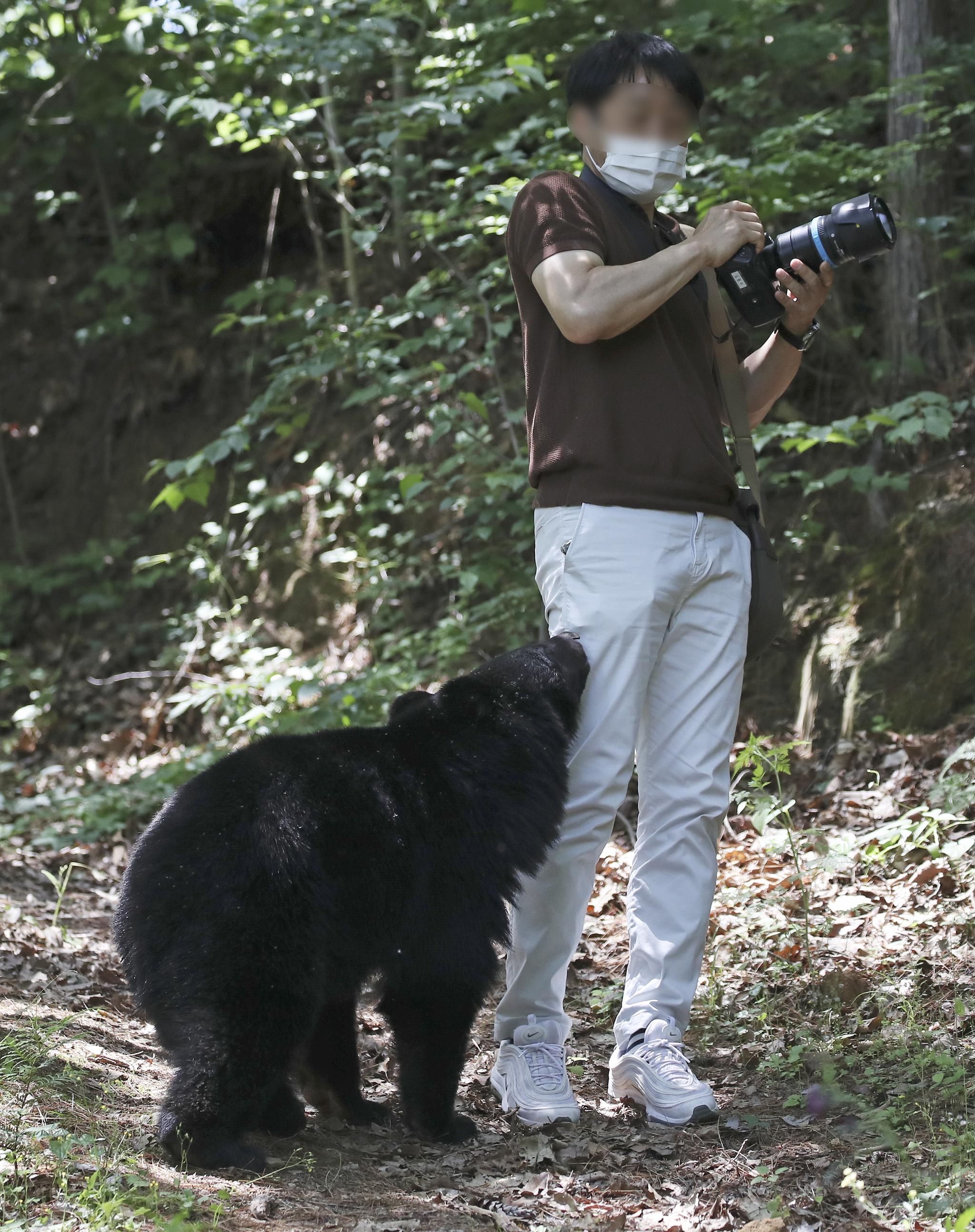 19일 오후 울산 울주군 범서읍 한 농장 인근에 반달곰으로 추정되는 곰이 나타나 취재하던 한 언론사 사진기자에게 다가갔다. 뉴스1