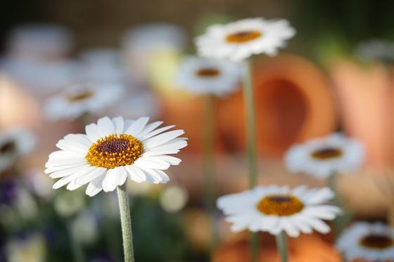 여름으로 가는 정원 풍경은 꽃 잔치가 따로 없다. 눈이 황홀할 만큼 아름답다. [사진 pixabay]