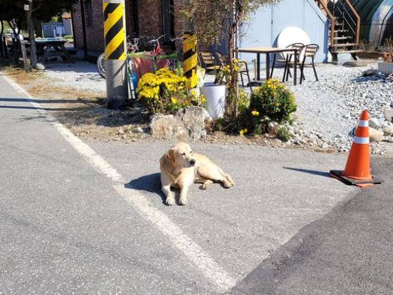 해마다 봄이면 플라이낚시를 하러 가는 강원도의 한 계곡에 가면 '번개'라는 이름의 순한 개를 만난다. 매년 반겨주는 '번개'가 어느날 안 보이면 마음부터 덜컥한다. [사진 전명원]