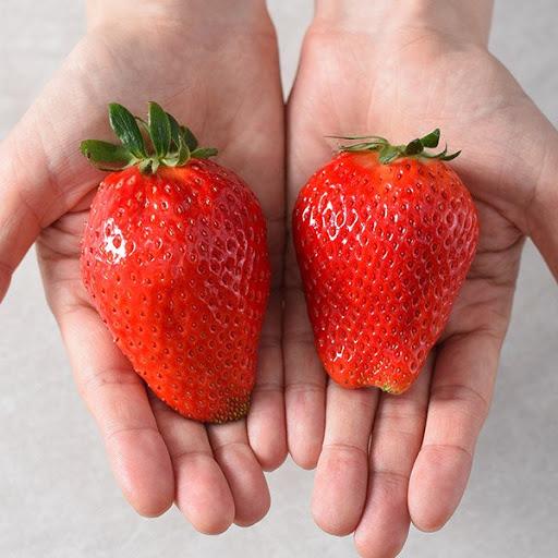 일반 딸기 보다 2~3배 이상 큰 킹스베리 딸기. 사진 쓱닷컴