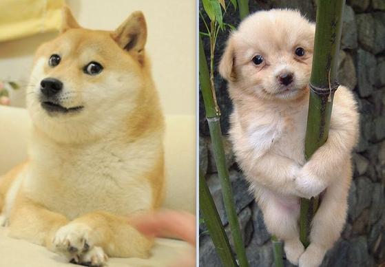 도지(왼쪽)와 개죽이. 인터넷 캡처