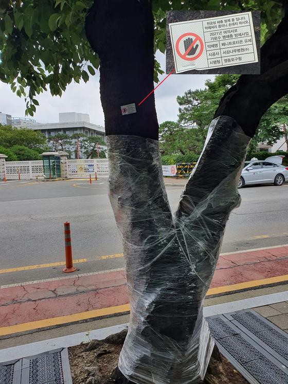 지난 18일 서울 영등포구 국회의사당 옆 여의서로 왕벚나무가 비닐 랩으로 싸여 있다. 나무에 해충 방제 중이라는 표찰이 붙어 있다. 최은경 기자