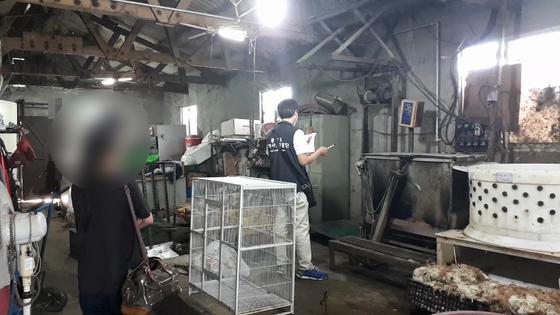 개를 불법 도살하거나 학대한 업자들이 경기도 단속에 대거 적발됐다. [사진 경기특사경]