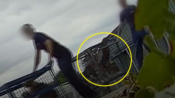 영국 캠브리지셔주 허팅턴의 사육 농장 MBR에이커스 관계자들이 실험견으로 투입될 비글 수십마리를 담은 철장을 트럭으로 옮기고 있다. [영국 동물단체 Stop animal cruelty Huntingdon 페이스북 영상 캡처]