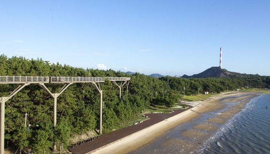 충남 서천군이 출산장려금을 최대 3000만원까지 올렸다. 사진은 서천군 장항제련소와 송림해변에 설치한 스카이워크. 연합뉴스