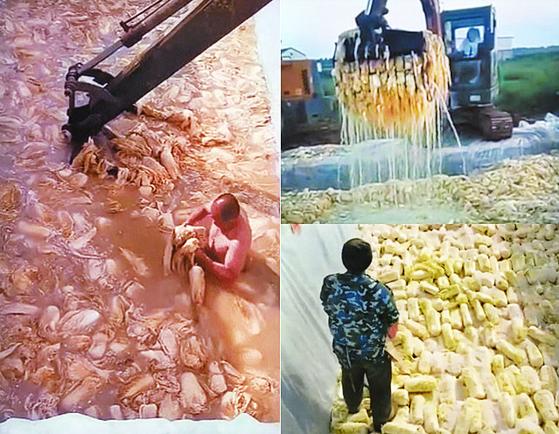 중국에서 배추를 절이는 과정을 담은 영상이라며 온라인 커뮤니티에 소개된 모습. 온라인 커뮤니티 캡처