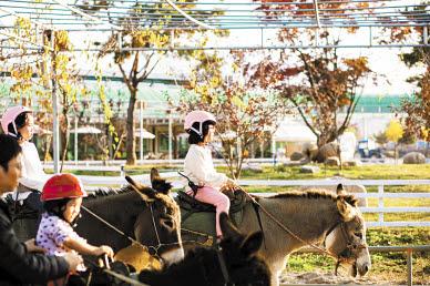 홍천 동키마을의 승나 체험(위)과 강진 녹향월촌체험휴양마을 푸소 프로그램의 시골 밥상.