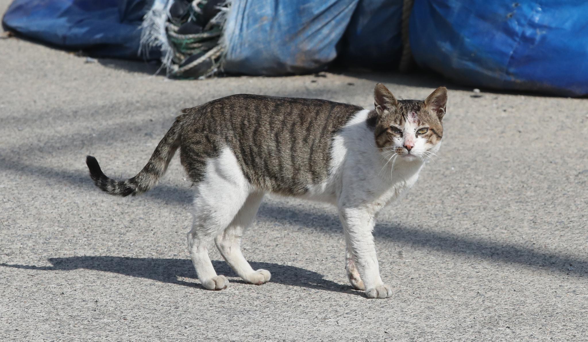 고양이 자료사진. 중앙포토