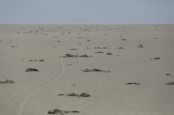 터키 중부 콘야주의 투즈호수 바닥에서 플라밍고 사체 수천 마리가 발견돼 충격을 주고 있다. [로이터=연합뉴스]