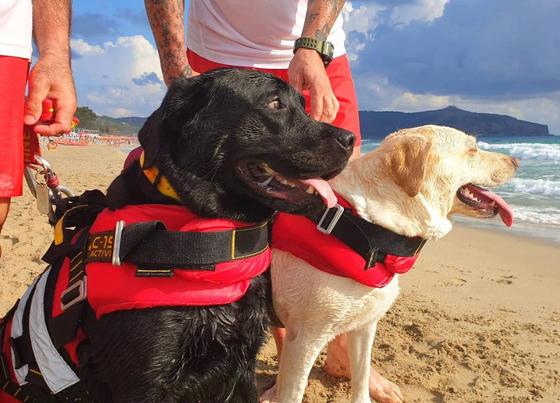 해변을 지켜보고 있는 구조견공 이고르(왼쪽)와 루나(오른쪽). [SICS]