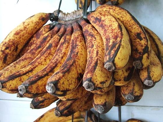 열대지방 디져트로 먹는 바란간 바나나(Barangan Banana). [사진 Midori on Wikimedia Commons]