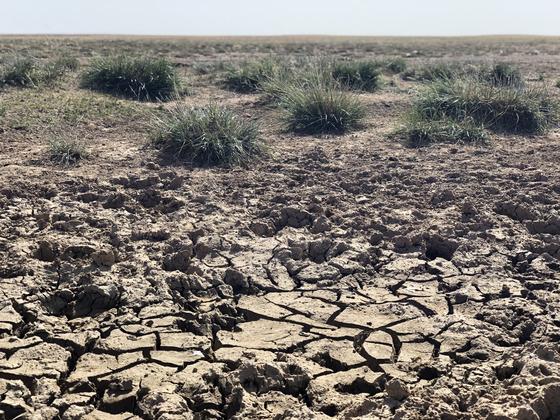 몽골 돈드고비아이막 만달고비시 인근의 초원이 황폐해졌다. 천권필 기자.