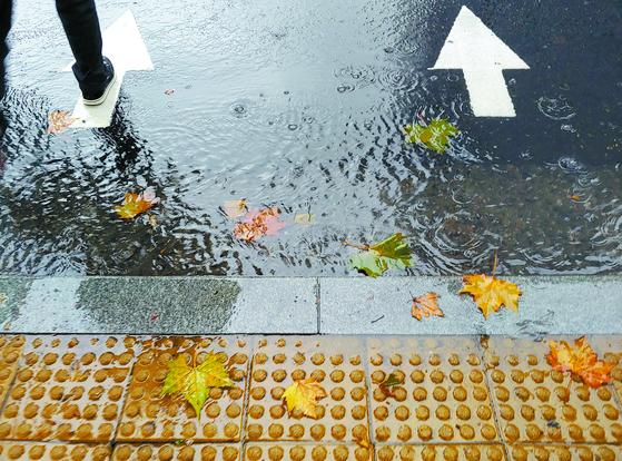 서울 서대문구 경찰청 앞 횡단보도 앞에 떨어진 낙엽과 가을비. [신인섭 기자]