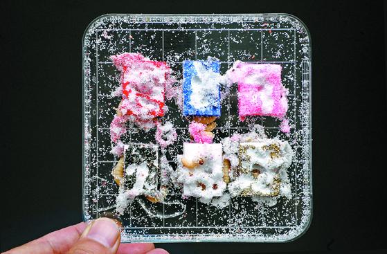 스티로폼 먹는 꿀벌부채명나방...쓰레기 해결 효자될까