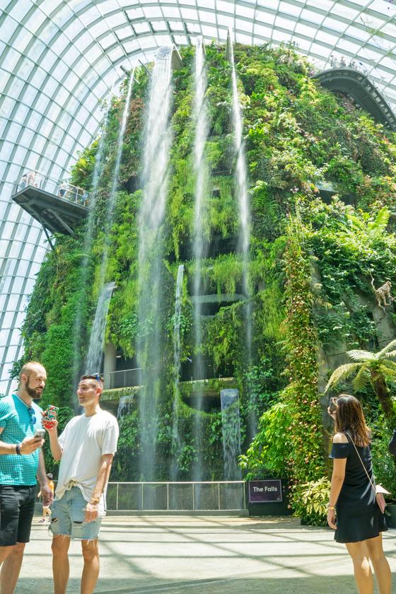 가든스 바이 더 베이의 유리 돔 '클라우드 포레스트'에는 고산식물로 가꾼 인공 산이 있다. 30m 높이의 폭포도 갖췄다. 실내 기준 세계 최고 높이다. 백종현 기자