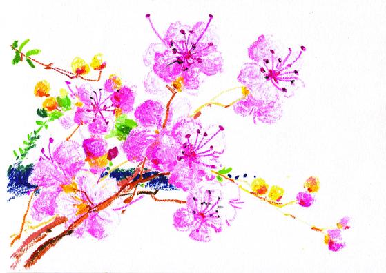 진달래꽃이다. 밭 옆의 야트막한 산에 지금 한창이다. 진달래를 철쭉과 혼동하는 이들이 꽤 있다. 진달래는 꽃이 먼저 피고 잎이 뒤에 난다. 철쭉은 반대다. 진달래가 철이 빨라 4월에, 철쭉은 5월에 핀다. 진달래는 먹을 수 있어 참꽃, 독이 있는 철쭉꽃은 개꽃이라고도 부른다. [그림=안충기]