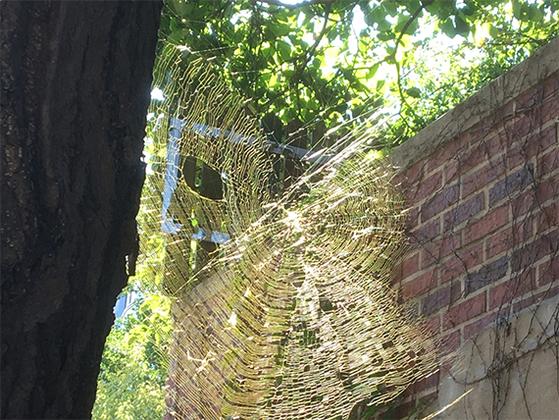 박태기나무에 걸려 있는 육각형 거미줄이 봄볕에 반짝이고 있다. [사진 김동률]