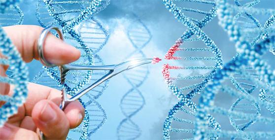 유전자 편집 기술이 발달하면 인간 불멸에 도전할 수도 있다. 유전자 가위로 DNA 이중나선 구조를 조작하는 상상도. [중앙포토]