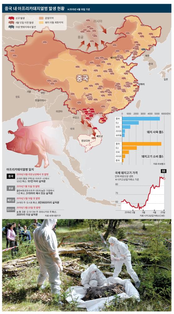 독일 발슈테트 수의사들이 ASF 바이러스 대비 훈련으로 멧돼지 사체를 조사하고 있다(아래 사진).[dpa=연합뉴스], [그래픽=박춘환 기자 park.choonhwan@joongang.co.kr]