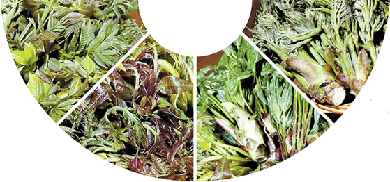 매년 4월 말~5월 초에만 맛볼수 있는 햇순(筍) 나물들. 왼쪽부터 옻나무, 참죽나무, 음나무, 두릅나무의 순이다. [신인섭 기자]
