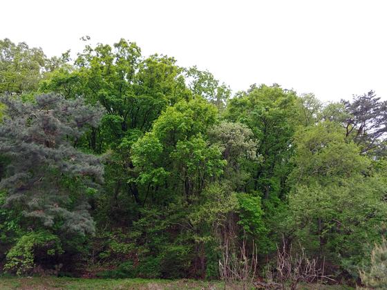 밭 옆의 동산은 지금 신록에서 초록으로 넘어가는 중이다. 안충기 아트전문기자