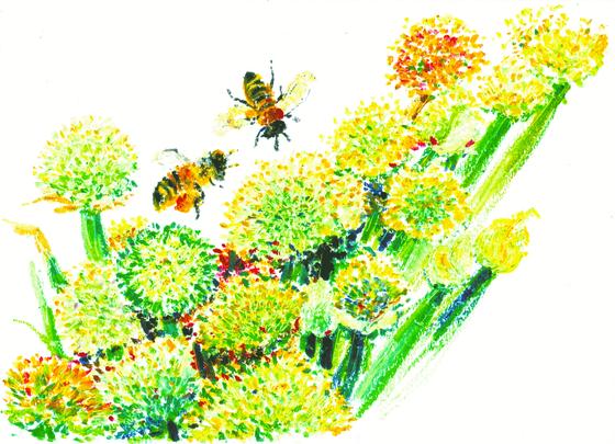 파꽃은 5월에 핀다. 안도현은 이렇게 노래했다. 이 세상 가장 서러운 곳에 별똥별 씨앗을 하나 밀어 올리느라 다리가 퉁퉁 부은 어머니/ 마당 안에 극지가 아홉 평 있었으므로/ 아, 파꽃 앞에 쪼그리고 앉아서 나는 그냥 혼자 사무치자/ 먼 기차대가리야, 흰 나비 한 마리도 들이받지 말고 천천히 오너라