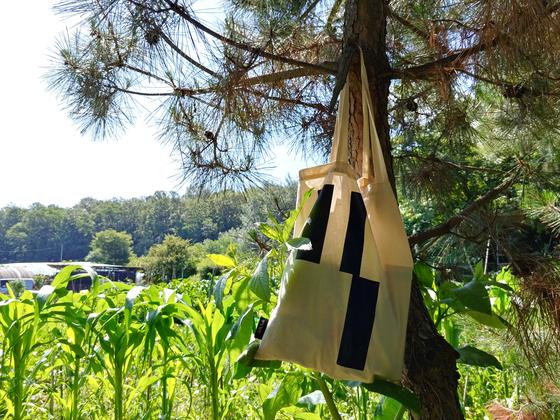 소나무 가지에 걸어놓은 내 일용할 양식 주머니. 물 한통, 콩물 한 통, 지갑이 들었다.