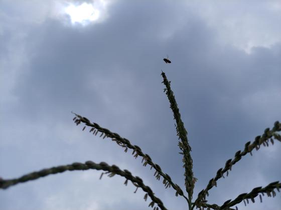 잔뜩 흐리고 비는 주지 않는 하늘. 벌침이라도 한방 놔야 하나.