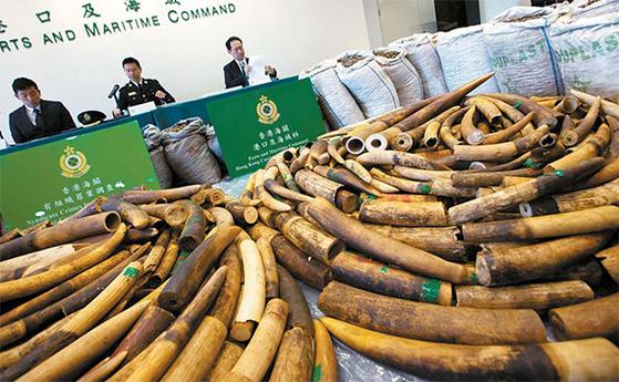 나이지리아에서 베트남을 거쳐 홍콩으로 밀반입된 코끼리 상아. [EPA=연합뉴스]