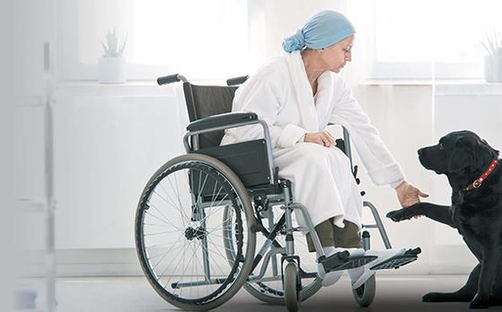 휠체어에 앉은 환자가 테라피 독과 교감하며 동물매개치료를 받는 모습. [라이프앤도그]