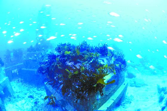 해조류와 어장이 형성된 트리톤. [사진 포스코]