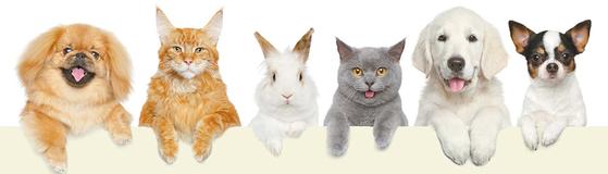 동물복지 메인 이미지