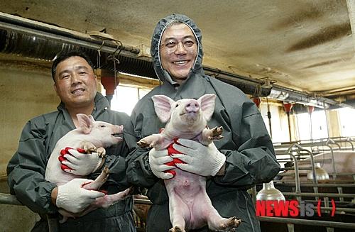문재인 돼지 이미지 검색결과