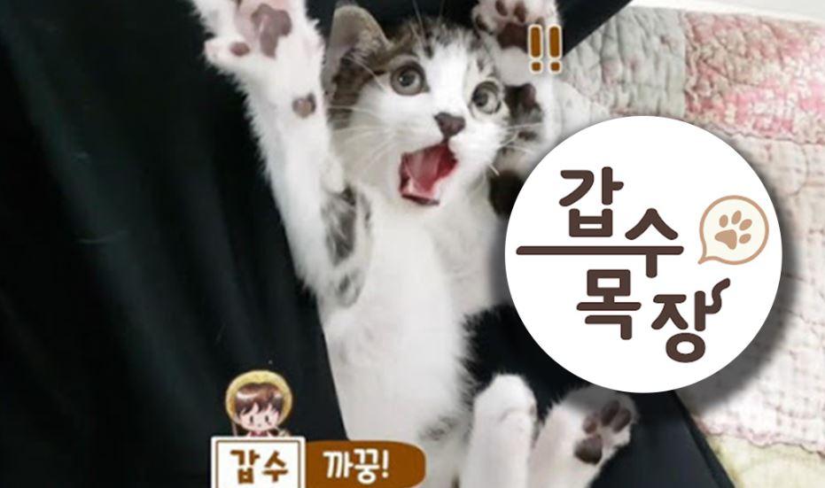 '촬영위해 밥 굶겼다'..유튜버 '갑수목장' 사건 총정리.