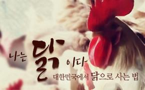 대한민국에서 닭으로 사는 법